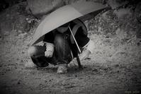 傘 2 景 - フォトな日々