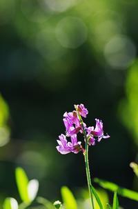 初秋の花-8 - 自然と仲良くなれたらいいな2