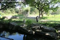 2018年8月 天王寺動物園4 その2 ペンギンガイド - ハープの徒然草