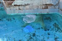2018年8月 天王寺動物園4 その1 - ハープの徒然草