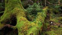 苔の白駒池 - 旅のかほり