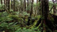 苔の白駒池Ⅱ - 旅のかほり
