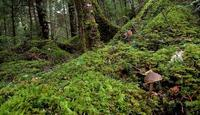 苔の白駒池Ⅲ - 旅のかほり