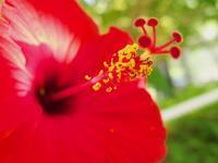 機材整理 その56:OLYMPUS STYLUS XZ-2 Part3 ~緑化植物園にて~ - Photo of the Weekend