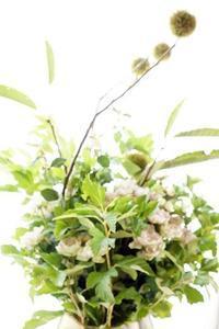 パリスタイル金澤、人気が出て来ました - お花に囲まれて