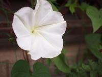 庭の花 - 57歳☆専業主婦やってます