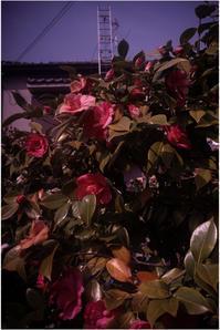 2013 地味に(2018年4月1日オルソスティグマート35mmF4.5は奈良町にひっそりと) - レンズ千夜一夜