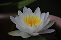 庭の花 - 私の息抜き(^o^)