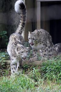 涼しくなってきて、狩りの訓練 - 動物園放浪記