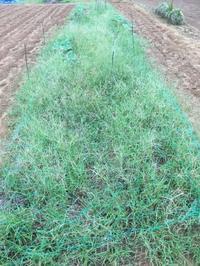 ホクホク系とねっとり系 - 週末農夫コーディーのイケてる鍬の振るい方