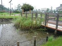 雨中管理 - Longhill Net Blog