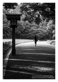 鎮守の杜で - ♉ mototaurus photography