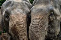 仲良しだった頃のゾウさんたち - ライカとボクと、時々、ニコン。