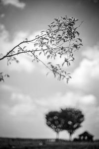 熱風に揺れるコブシ - Silver Oblivion