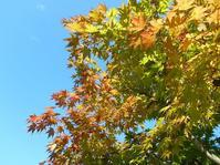 2018年9月の藤田記念庭園茶会開催のお知らせ - Tea Wave  ~幸せの波動を感じて~