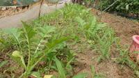大根の畝の草取りと施肥そして玉ねぎ、蕪の種蒔き完了 - ざっかラボ九隆庵 創作事情