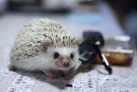 9月15日(土)放置 - ほのぼの動物写真日記