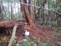 OSK三角点踏査…江原坂(点名)柳島山 - 山にでかける日