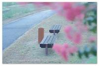 公園の。 - Yuruyuru Photograph