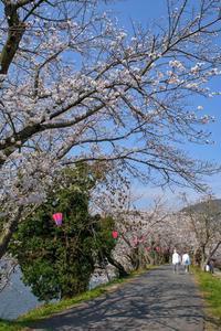 ☆ 煌めく桜花 - チャレンジ! 鳥、鉄、風・・・