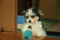 B.B & Chipo* 突然のスイッチ(!?)に!?? - FUNKY'S BLUE SKY