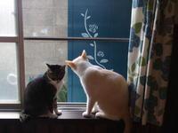木戸の塗り替え - 3色猫だんご+1