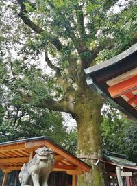 坂本龍馬&おりょうさん縁の武信稲荷神社 @京都・六角大宮 - たんぶーらんの戯言