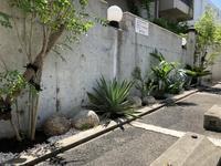 竹の脅威と新規植栽 - acorns flower days