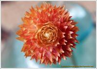 庭に咲く花-23今咲いてる花いろいろ - 野鳥の素顔 <野鳥と・・・他、日々の出来事>