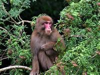 食欲の秋がやって来ました。お猿さん - ベジタブルpartⅤ(鳥と共に日々是好日)