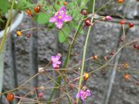 初秋の庭 - 花と葉っぱ