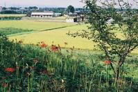 季節を告げる花のある風景 - か写![kasha!]
