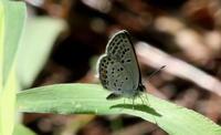 久しぶりの良い天気 - 紀州里山の蝶たち