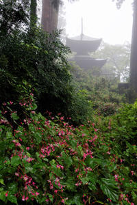 迷いの森 ~4度目の挑戦 - katsuのヘタッピ風景