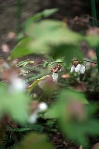 赤塚植物園風景 - デジカメ一眼レフ開眼への道