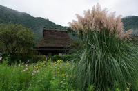 雨の秋の花達@美山茅葺きの里其の二 - デジタルな鍛冶屋の写真歩記