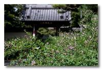 円光寺の萩 - 気まぐれフォト