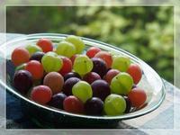 とりどりな葡萄たち - ひとりあそび