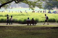 まゝに/昭和記念公園2 : キバナコスモス他 - Maruの/ まゝに