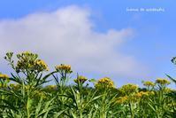 休日に歩く、8月の森の丘 - 礼文島★ハナとわたし