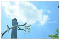 Sun 3 Sunday。ジャンプ。 - Yuruyuru Photograph