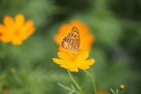 淀川河川敷で花や蝶々を撮りました。ハチも居ました。 - 写真と画像 Illustrator&Photoshopで楽しんでます! ネイル画像!