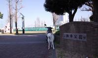 Vol.1390 御幸公園 - 小太郎の白っぽい世界