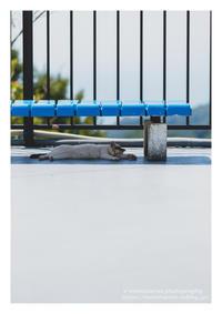 快眠中 - ♉ mototaurus photography