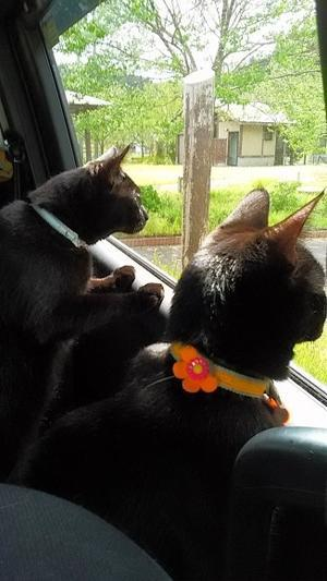 黒猫くーちゃんとまろ -