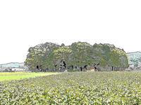 #1259白山郷惠比壽神社 - 想い出cameraパートⅢ
