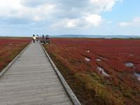 能取湖の珊瑚草と能取岬 - 北緯44度の雑記帳