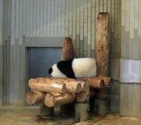 上野がすきシャンシャンその9 - 動物園のど!