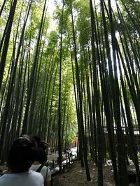 鎌倉の報国寺で竹林散策 - いろんなところに出没中