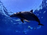 180916 今日もまた水中イルカ~☆★ - KAIZIN BLOG